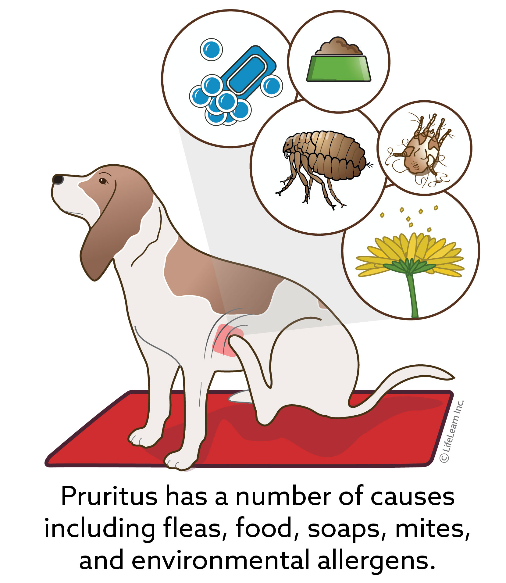 pruritus_dog_2018-01