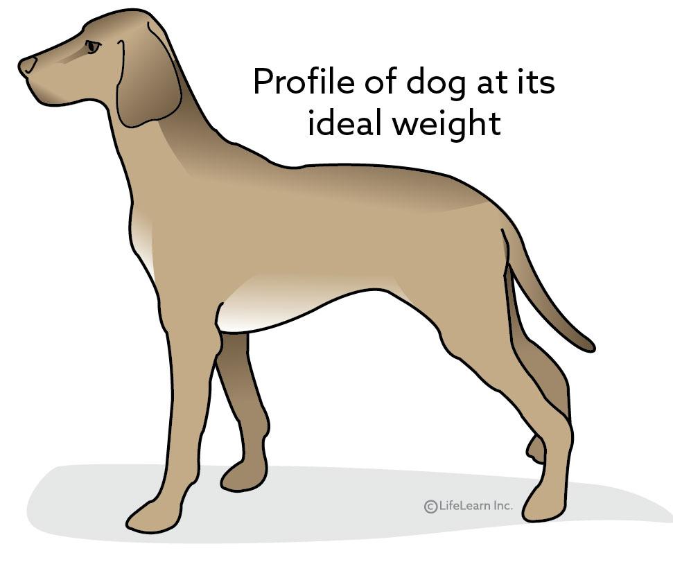 dog_obesity_2017-01