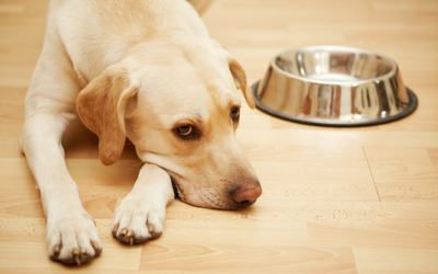 dog_food_bowl