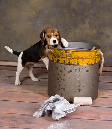 puppy_garbage