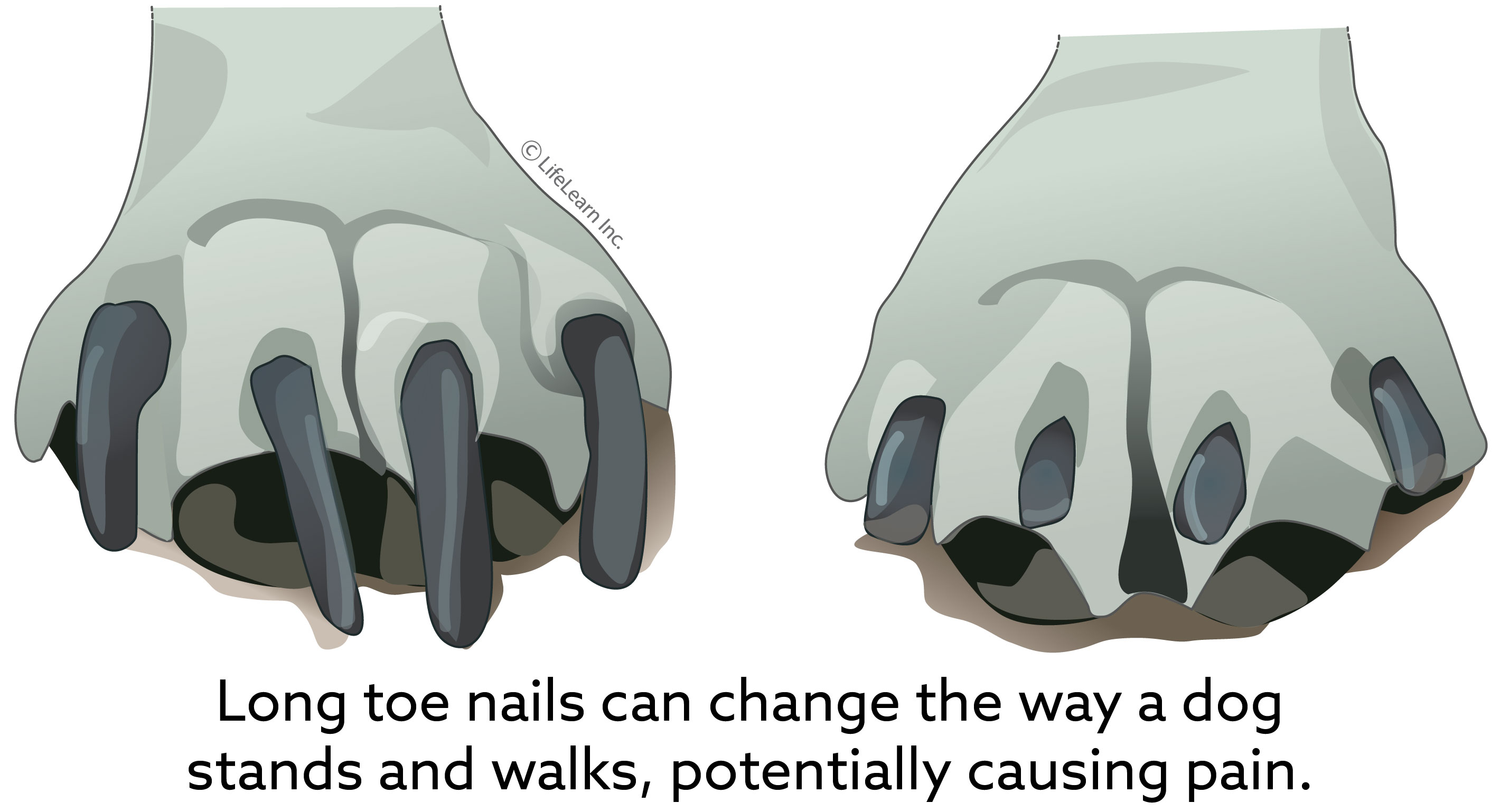 senior_dog_nail_length_2018-01