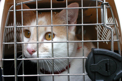 crate_training_and_travel_in_cats