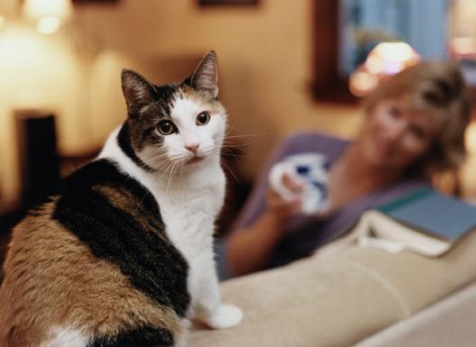 undesirable_behavior_in_cats_1