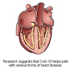 coenzyme_q-10-3