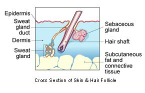 fibrosarcoma_and_feline_sarcoid-1