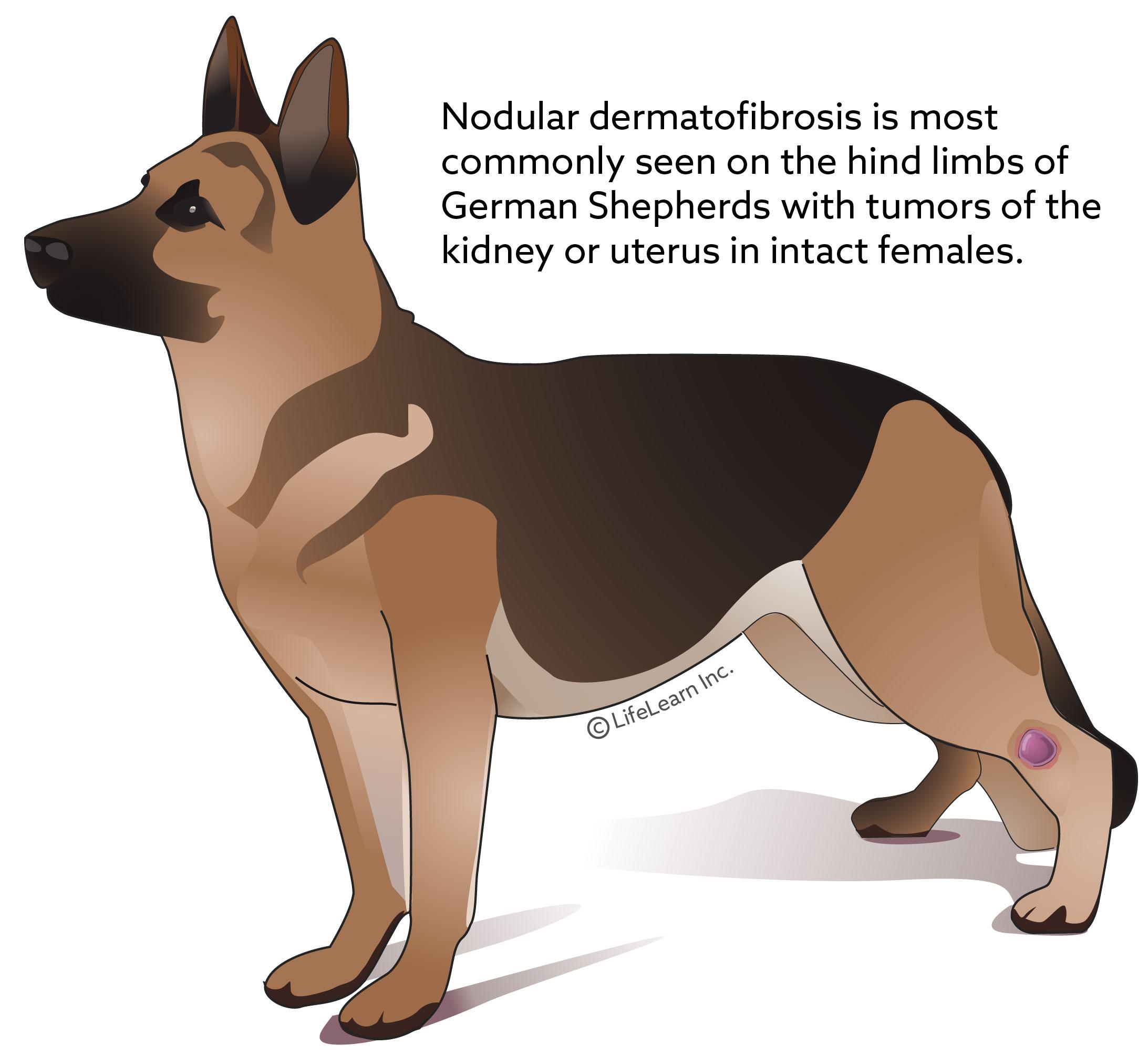 dog_nodular_dermatofibrosis_2018-01