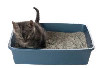 housesoilingcats1