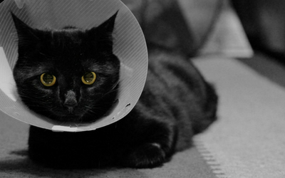 post-op_recovery_cat