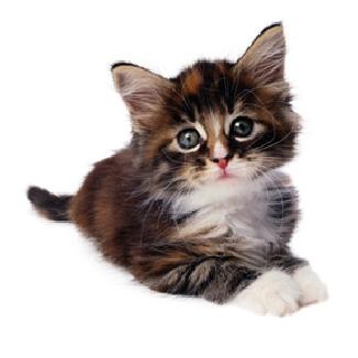 kittens_-_raising_kittens-1