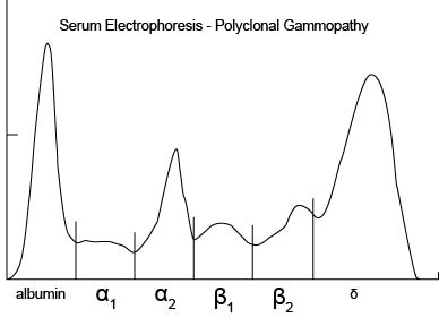 serum_protein_electrophoresis-3