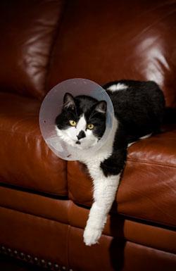 bandage_and_splint_cat_2