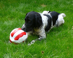 care_of_surgical_incisions_in_dogs4