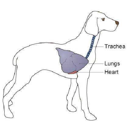 lung_tumors-1