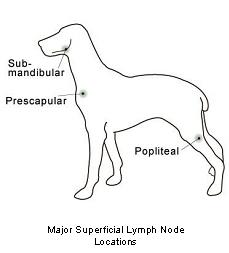 lymphoid_tumors-1