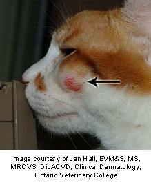 mast_cell_tumors_in_cats-1