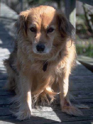 wellness_dog_geriatric-1