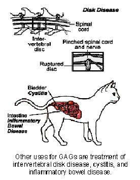 glycosaminoglycans_gags-2