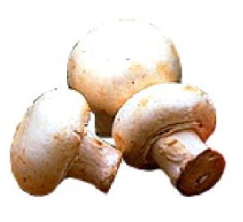 medicinal_mushrooms-1