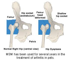 msm-1