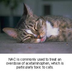n-acetylcysteine-1