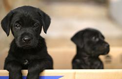 breeding6-rearing_puppies2