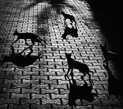 actividad_nocturna_excesiva_en__gatos