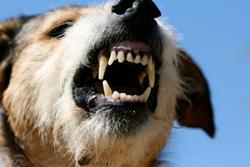 diagnstico_y_tratamiento_de_la_conducta_agresiva_en_perros