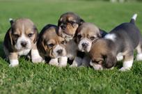 socializacin_del_cachorro-1