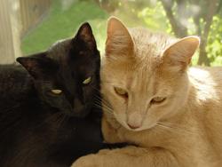 uno_o_varios_gatos_pros_y_contras