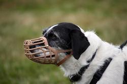 uso_de_bozales_en_perros