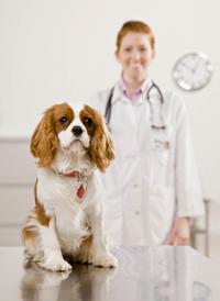 veterinary_visits_examinations_-_desensitization_reducing_fear_2