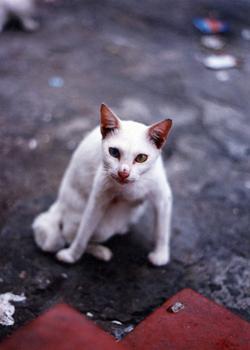 montas_y_cras_en_gatos