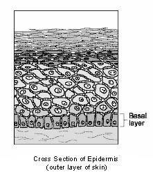 skin__basal_cell_tumors-1