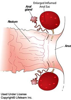 anal_sac_disease_-_2009