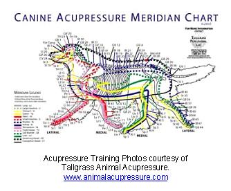 veterinary_acupuncture-2
