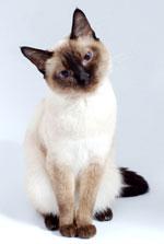 cat---head-tilt