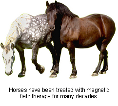 veterinary_magnetic_therapy-2