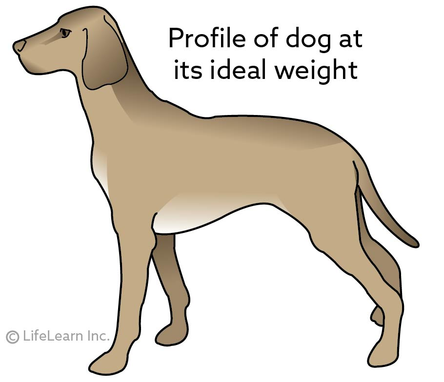 dog_ideal_weight_profile_2017