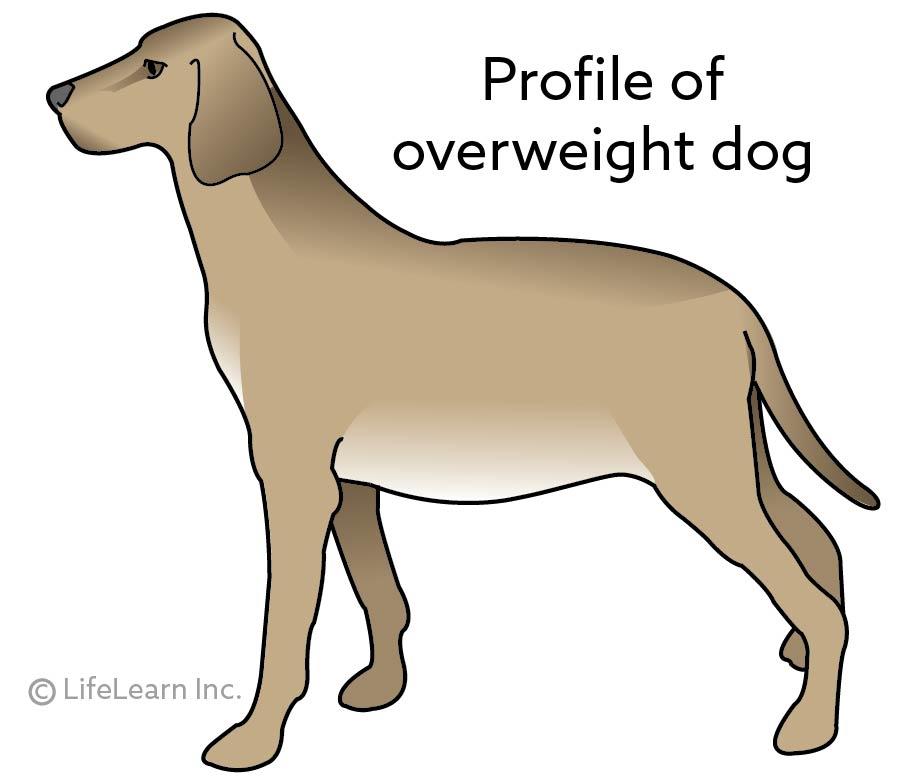 dog_obesity_profile_2017