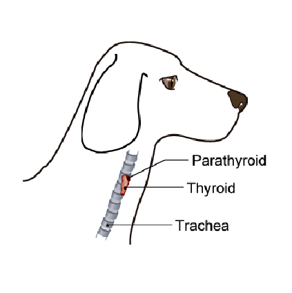 thyroid_tumors-1