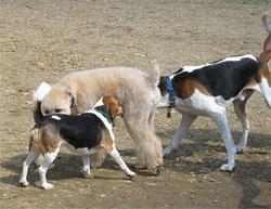 dogbehavioraggressionunfamiliartreatment1