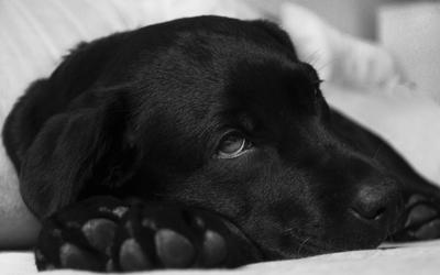 sick_dog_emergencies
