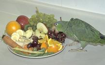 amazon_parrots-feeding-1