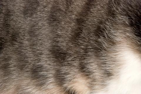 cat_-_fur