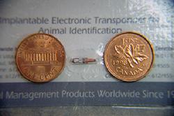 microchipping-1_2009