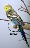 common_conditions_of_birds-1