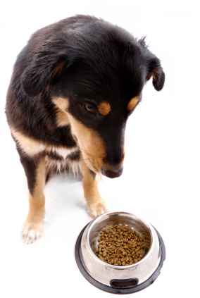 dogfoodlabels
