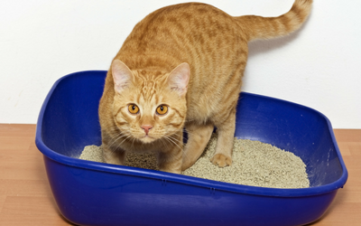 cat_diarrhea_cat_in_litterbox_1