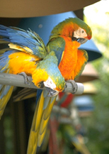 macaws-1