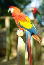 macaws-2
